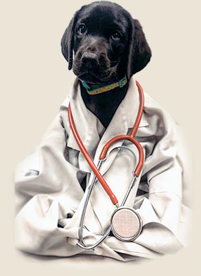 Pupply with Stethyscope